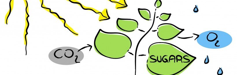 Heat clipart photosynthesis Brings photosynthesis photosynthesis Valley the