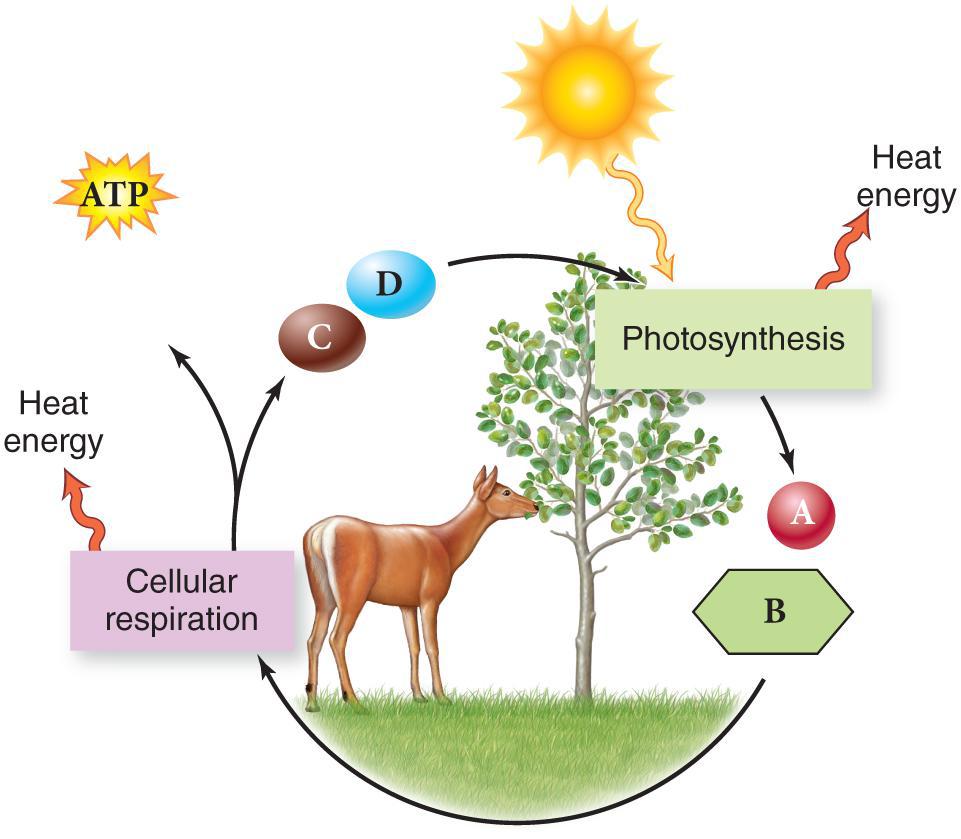 Heat clipart photosynthesis (lesson photosynthesis TQA explorer 0424)