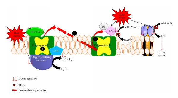 Heat clipart photosynthesis Stress of mechanism block and