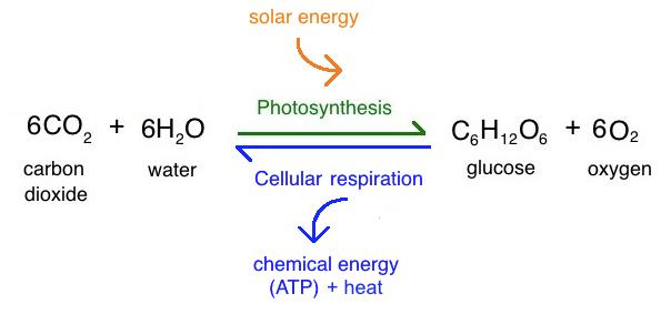 Heat clipart photosynthesis (video) Photosynthesis Academy Khan