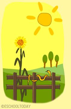 Plant clipart living thing Sunlight sunlight living for survive?