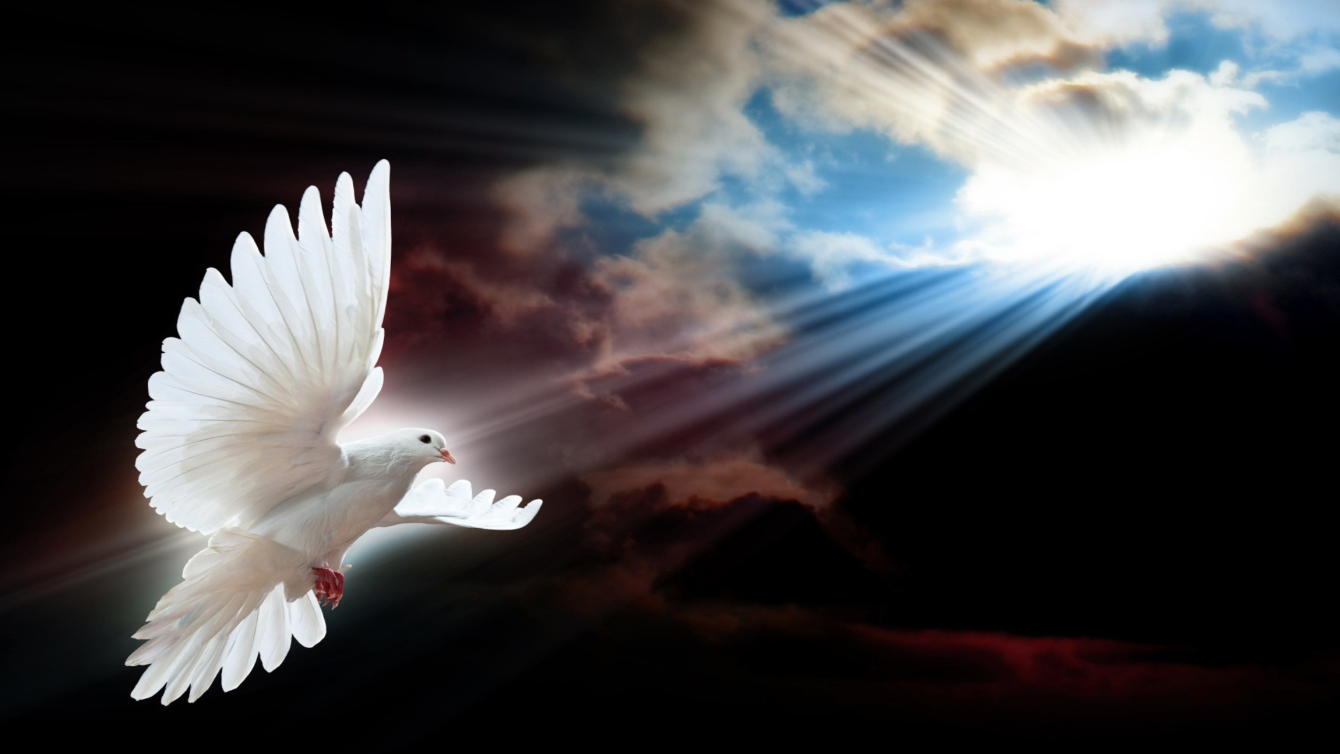 Heaven clipart hd wallpaper Tag Pink Doves 8 Peace