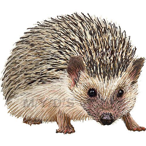 Hedgehog clipart Hedgehog & Clip Free clipart