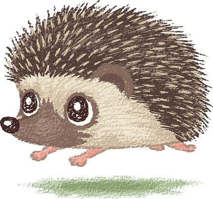 Hedgehog clipart Savoronmorehead the WikiClipArt Hedgehog Clipart