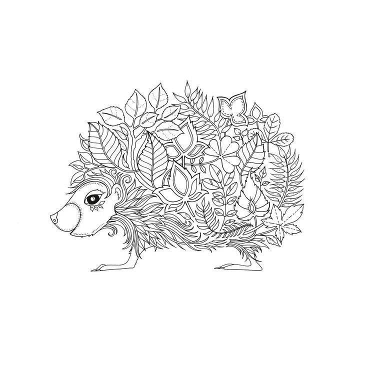 Hedgehog clipart hiran Pages & Hedgehog Coloring more