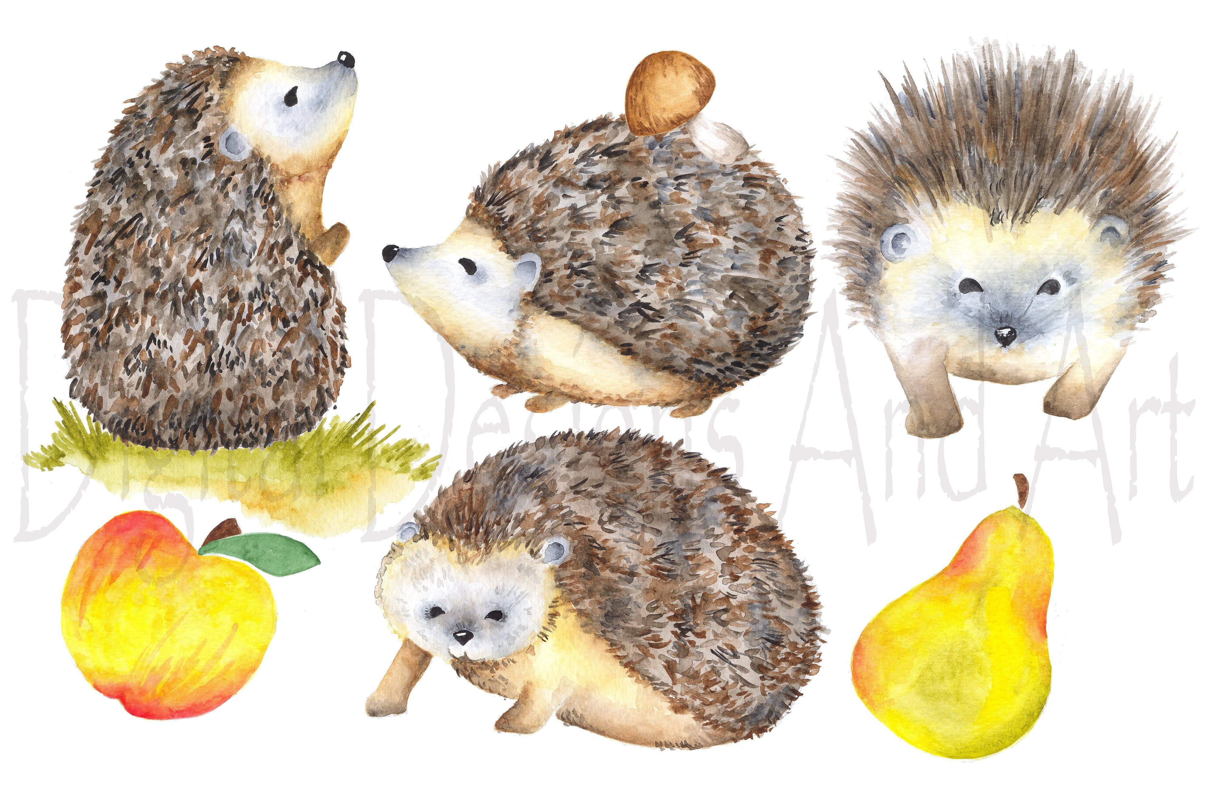 Hedgehog clipart hiran  Themes Templates clipart hedgehog