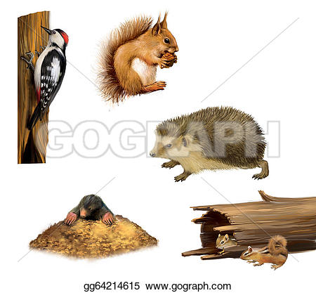 Hedgehog clipart urchin Illustration  Illustration on gg64214615