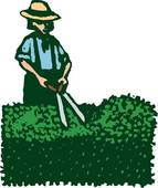 Hedges clipart shrubbery Hedge Clipart Hedge cliparts