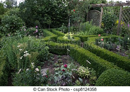 Hedges clipart black and white Boxwood garden csp8124358 hedges Pictures