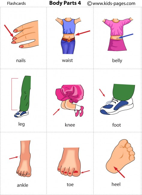 Legs clipart body part Parts Pages  4 Vocabulary