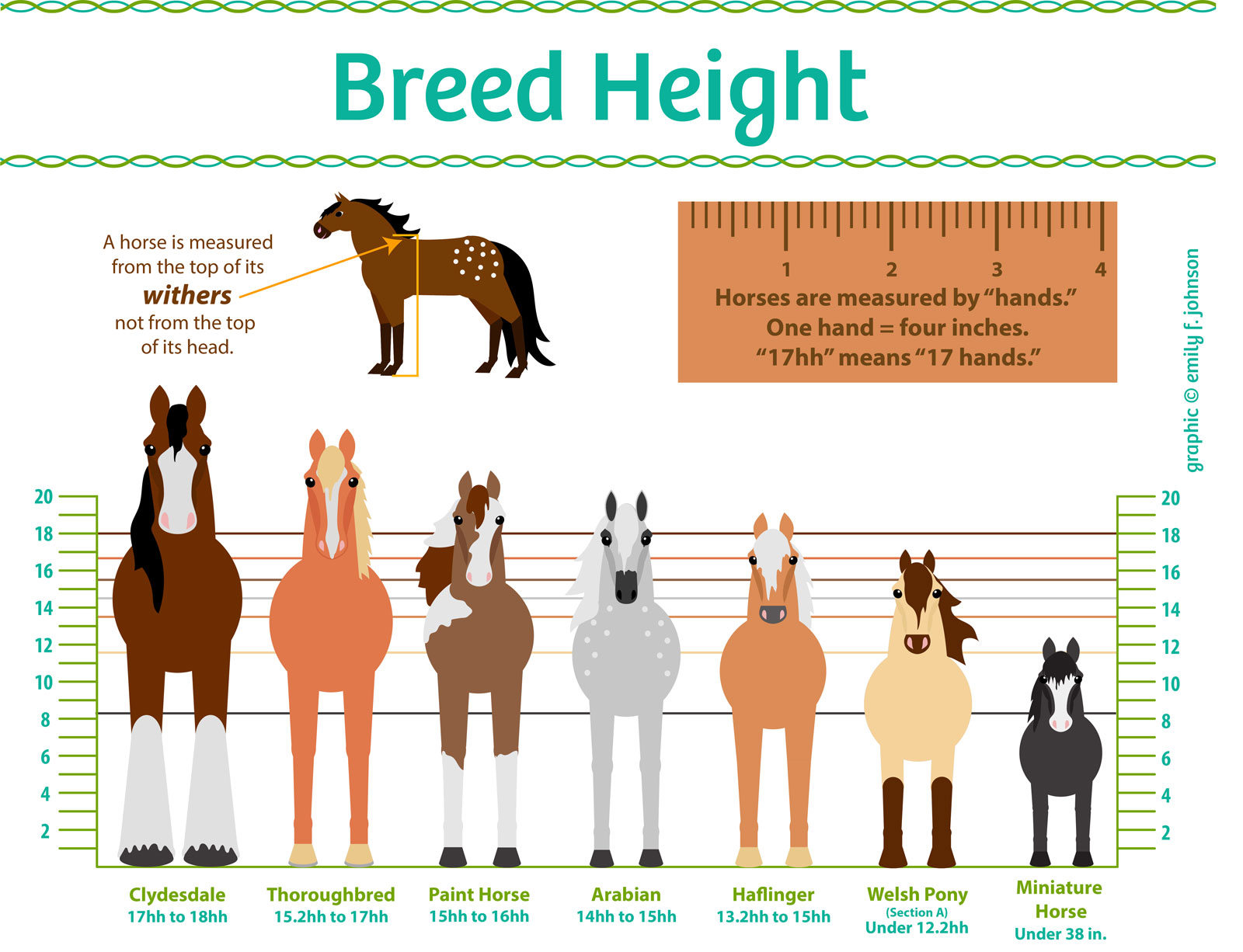 Heights clipart height chart Horse Sizes Breed Height Chart