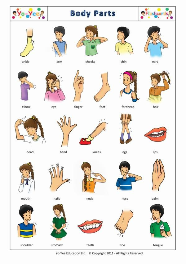 Hello! clipart child body Flashcards body Parts Body for