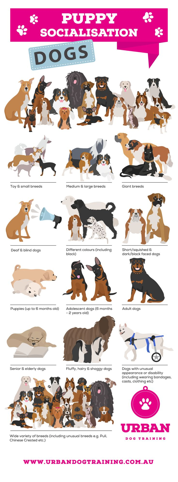 Hello! clipart socialisation Is Variety The play dogs