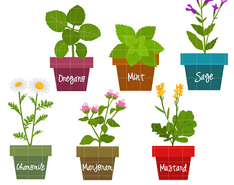 Spices clipart vector And Spices Clipart Herbs Clipart