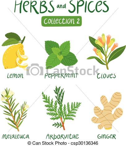 Herbs And Spices clipart different kind Collection Vector Clove and Spices