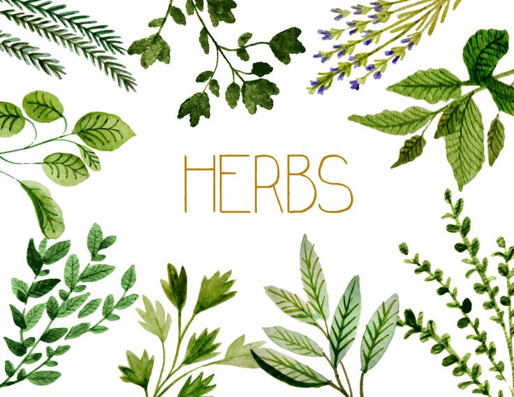 Herbs clipart herbs and spice Invites Options Herbal watercolor Herbs