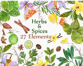 Basil clipart watercolor Clipart: Herb spices Herb flower