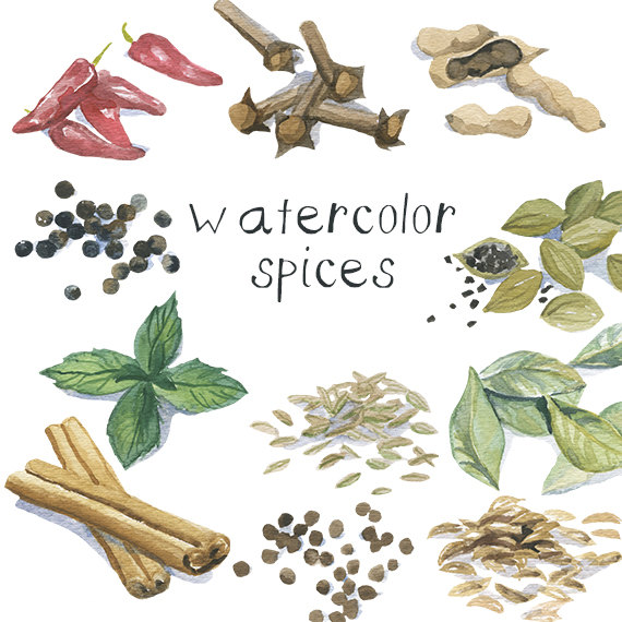 Herbs And Spices clipart spice rack Watercolor Digital Commercial Spices Plant