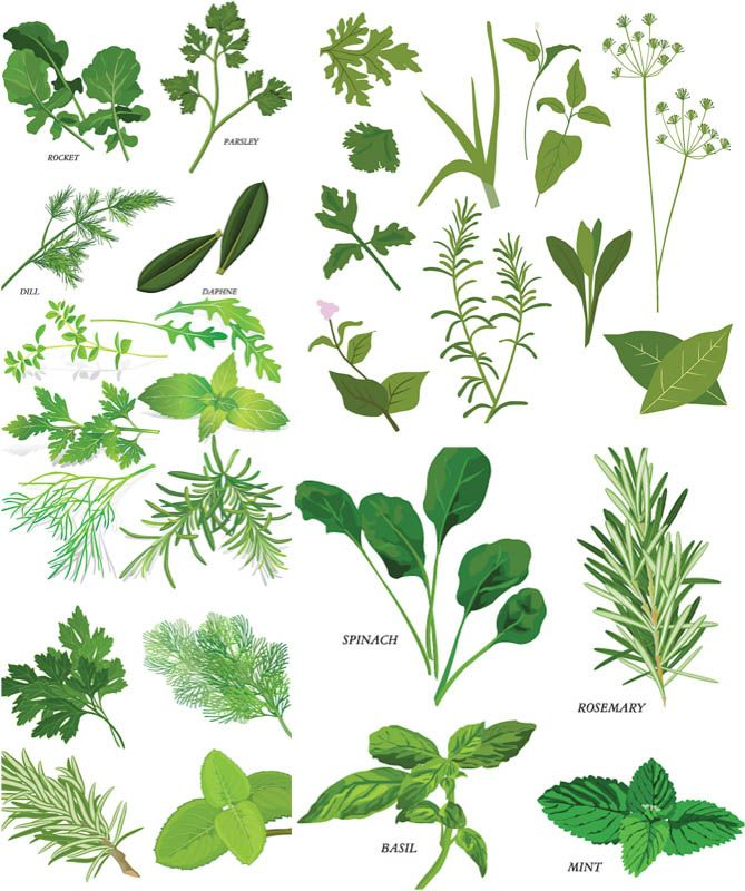 Plant clipart botany Illustrations on illustration ideas 25+