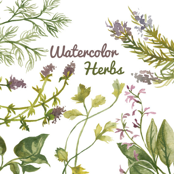 Herbs clipart herbs and spice Instant Clip Commercial Clipart Plant
