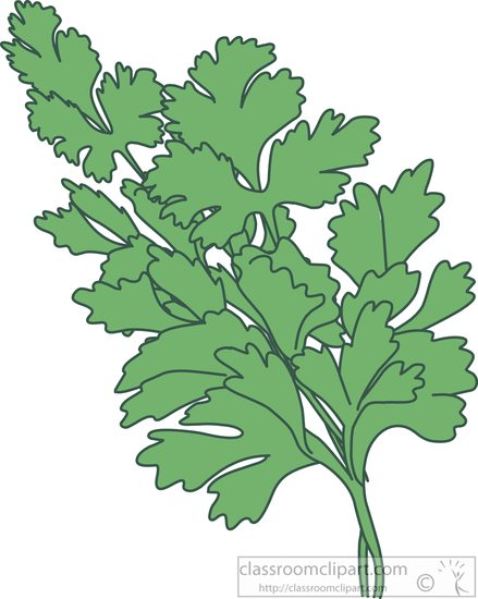 Parsley clipart #11