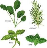 Herbs clipart Fresh Royalty herbs GoGraph ·