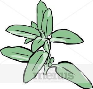 Parsley clipart basil MustHaveMenus & Herbs Graphics Oregano