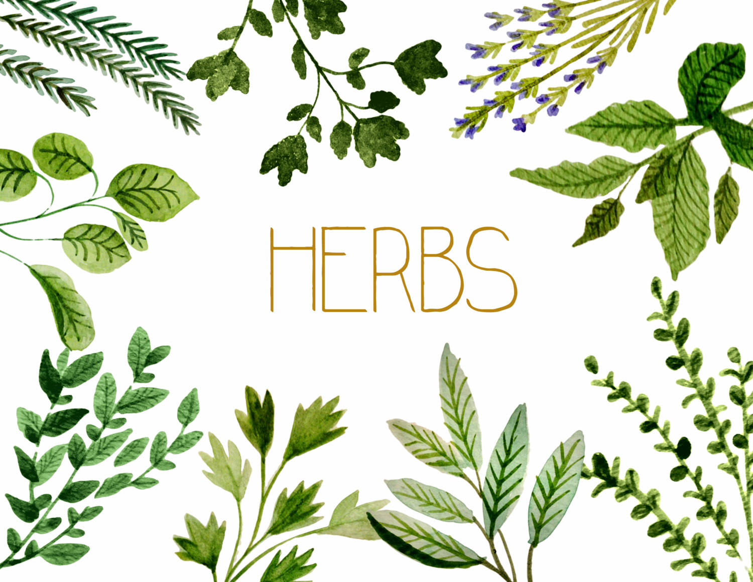 Herbs clipart Herbs Images clipart watercolor Info