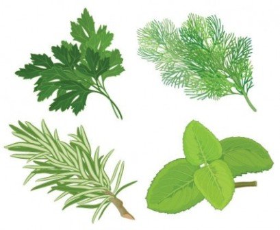 Herbs clipart Clipart Clipart Panda Herb Images