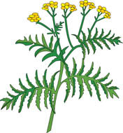 Herbs clipart View Graphics Free Herbs to