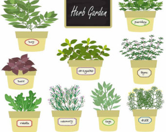 Herbs clipart Herbal web plant elements Herb