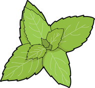Herbs clipart With  Kb colorful Herbs