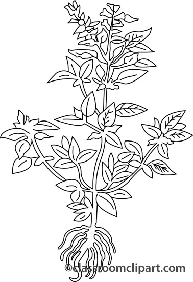 Basil clipart black and white Kb Search Pictures Results Size: