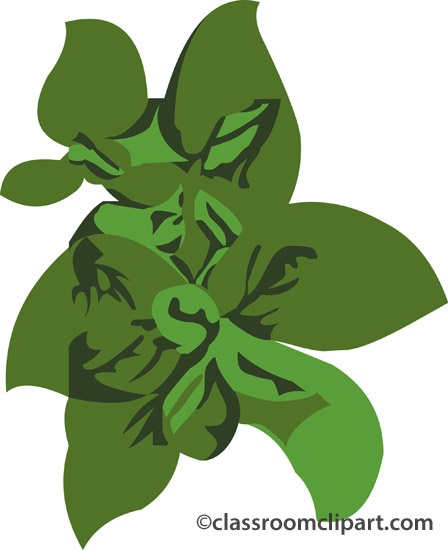 Herbs clipart basil Herbs Search  From: Basil