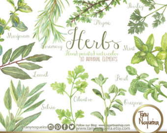 Parsley clipart herb #13