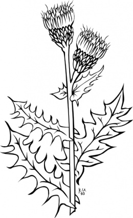Herbs clipart black and white Clip Cirsium Art com Ku