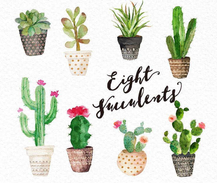 Herbs clipart cactus plant This more on Pinterest Pin