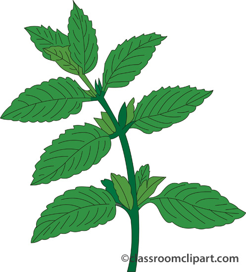 Mint clipart peppermint Clipart Plant cliparts Herbs Peppermint