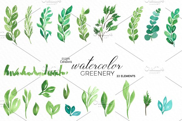 Herbs clipart eucalyptus leaves Creative Bundle Tropical ~ Watercolor