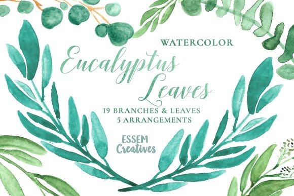 Herbs clipart eucalyptus leaves Eucalyptus Leaves Clipart on Watercolor