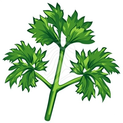 Parsley clipart cilantro #15