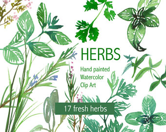 Basil clipart watercolor Herbs Herb Printable painting Botanical