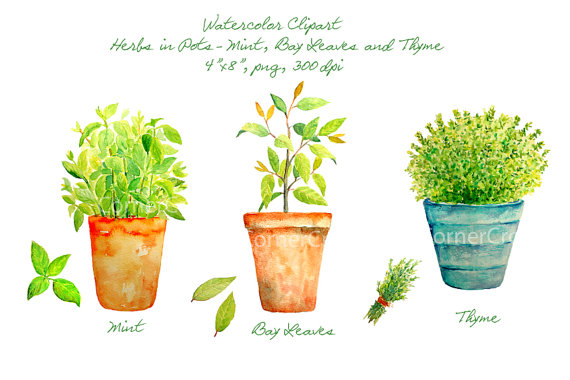 Mint clipart herb Etsy Hand pots mint printable