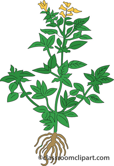 Mint clipart herb Cliparts Clipart Leaf Herbal Herb