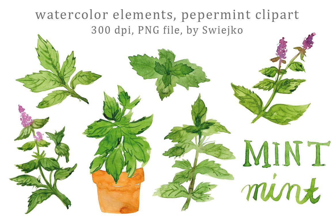 Mint clipart peppermint TheHungryJPEG Mint Leaves Art Herbs