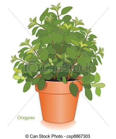 Herbs clipart oregano Oregano  Herb Alternative Clipartby