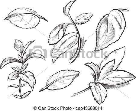 Mint clipart peppermint leaf Hand Clip leaves medicine hand