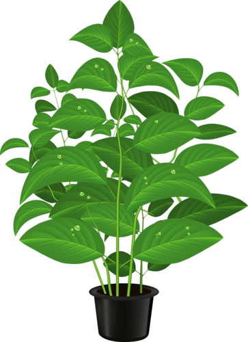 Drawn pot plant clipart Clip on Find Clipart ~