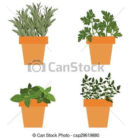 Basil clipart parsley Vector culinary pots parsley Vector