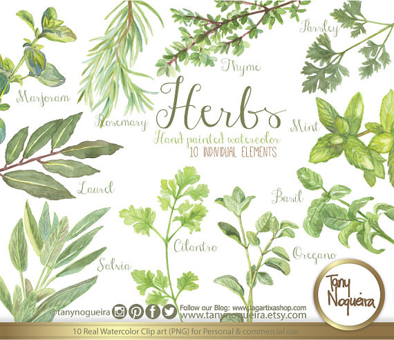 Parsley clipart oregano Parsley Shabby png Chic Chic